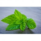 Fresh Mint Pre-Mixed Specialty
